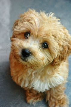 puppy! ...........click here to find out more
