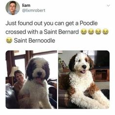 Cute Little Animals, Cute Funny Animals, Funny Cute, Cute Cats, Funny Animal Memes, Dog Memes, Funny Dogs, Boy Dog, Funny Dog Pictures