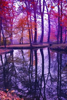 Purple hues of reflections in a lake.
