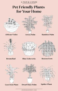 7 best houseplants for the best houseplants for the kitchen - Old House Journal MagazineBeautiful pet friendly houseplants Home Design - HOUSE PLANTS - beautiful .Beautiful pet friendly houseplants Home Design - HOUSE Inside Plants, Cool Plants, Garden Plants, Indoor Plants, Indoor Garden, Hanging Plants, Cast Iron Plant, Room Deco, Spider Plants