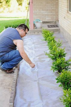 A DIY landscaping tutorial for adding boxwoods or plants to the front of your home to boost curb appeal. An easy, affordable, and quick DIY landscaping tutorial for adding boxwoods shrubs to your home to boost curb appeal and home value. Front Yard Landscaping, Backyard Landscaping, Landscaping Melbourne, Landscaping Ideas, Boxwood Landscaping, Luxury Landscaping, Landscaping Supplies, Boxwood Garden, Pergola Ideas