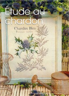 Cross stitch - flowers: botanicals - Panicaut maritime - sea holly (free pattern with chart)