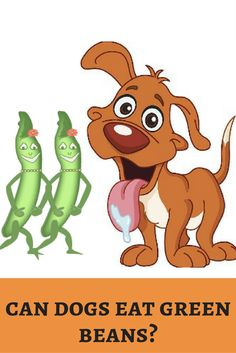 Green beans makes me slim and fit. May I try this fitness diet to my pooch? Crunch more! http://dogbabe.com/can-dogs-eat-green-beans/