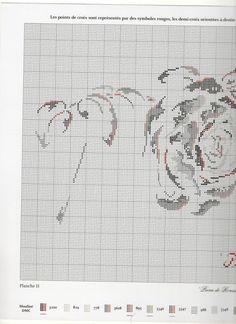 Gallery.ru / Фото #20 - Roses + бонус - rabbit17