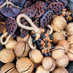 Seed Pod Bunches make great interior decorations. Support ethical and sustainable trade. Rustic Furniture, Vintage Furniture, Seed Pods, Indoor Outdoor Living, Interior And Exterior, Interior Decorating, Decorations, Home Decor, Decoration Home