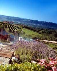 Italian Cookery Courses: Asti, Piedmont Cookery Holiday in Italy