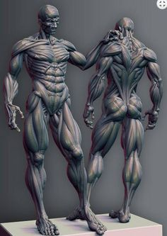 Human anatomy for artists, body drawing, anatomy poses, anatomy, muscle Human Anatomy For Artists, Human Anatomy Drawing, Human Body Anatomy, Human Figure Drawing, Muscle Anatomy, Anatomy Study, Body Drawing, 3d Anatomy, Anatomy Practice