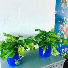 #myelho vandaag bij tuinland vond ik eindelijk blauwe bloempotten passend bij ons behang! #pipstudio #kindjeopmoedersschoot #kringloop #kastjestik #bloemen | Content shared via elho Inspiration Gallery