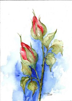 red and blue-sold watercolours painting granül suluboya kağıdı Watercolor Paintings For Beginners, Watercolor Cards, Abstract Watercolor, Watercolor And Ink, Watercolor Illustration, Watercolor Flowers, Simple Watercolor, Tattoo Watercolor, Watercolor Ideas
