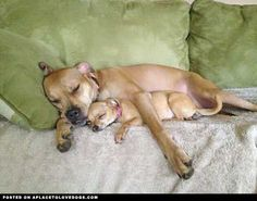 Let's Get Some Rest • dog dogs puppy puppies cute doggy doggies adorable funny fun silly photography