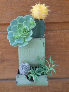 "Cactus and Succulent..NOW I KNOW WHAT TO DO WITH MY ""OLD MATCH HOLDER"" DON'T THINK I WILL PAINT IT.."