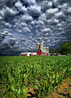 countryparadise:  Wisconsin (by Phil~Koch)