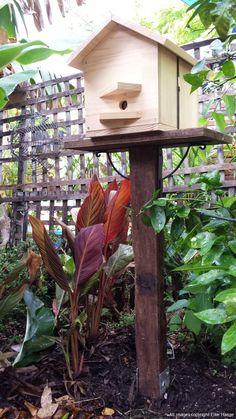 Native Stingless Bees for sale Sydney Bees For Sale, Stingless Bees, Native Australians, Bee Keeping, Habitats, Nativity, Bliss, Backyard, Gardening