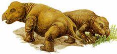 mammal-like reptiles | Top 7 Mammal-Like Reptiles