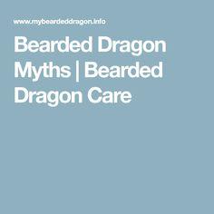 Bearded Dragon Myths | Bearded Dragon Care