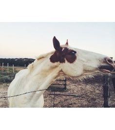 @Who What Wear - Hear that? It's us, signing up for equestrian classes.  Image via Natalie Off Duty