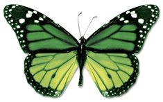 en-guzel-kelebek-resimleri-fotograflari-14