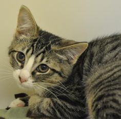 Homeward Pet Adoption Center in Woodinville, WA