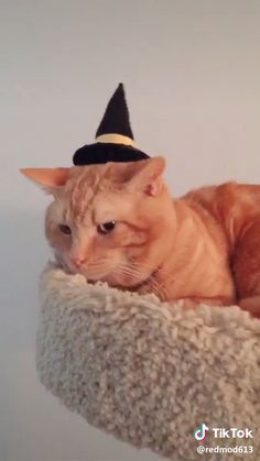 Witch Hat for Cats Does your cat not want to be a cat for Halloween? Make this little witch hat to get your cat in the spirit! Funny Animal Videos, Funny Animals, Cute Animals, Cute Cats And Kittens, Kittens Cutest, Hearly Quinn, Stranger Things Halloween, Cat Hat, Cat Costumes