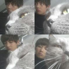 yeah...that's BTS — Can you do a BTS + cats post? I like cats more...