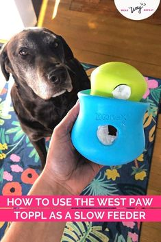 The West Paw Toppl is a stuffable dog toy with a wide opening that's perfect for filling with your dog's food, treats and natural chews. The durable zogoflex rubber can be frozen to make the treat-stuffed toy last longer or be more challenging for your dog. I'm excited to share more about this great toy and some of the fun ways you can use it including a slow feeder puzzle and bully stick holder! Since the opening is so wide, the Toppl is a great toy for dogs who are new to interactive toys. Brain Games For Dogs, Slow Feeder, Bully Sticks, Chocolate Labs, Labrador Retrievers, Interactive Toys, Find Pets, Dog Friends, Dog Mom