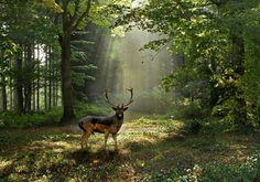 Fallow Deer by John Robinson    http://www.incrediblesnaps.com/cute-photographs-of-deers