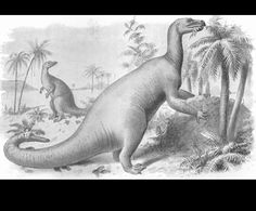 Iguanodon  by Joseph Smit (1836-1929)  from Extinct Monsters  1892 England