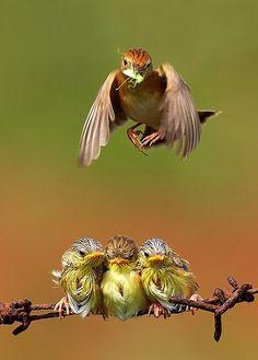 Bird photographer - Octavianus Darmawan