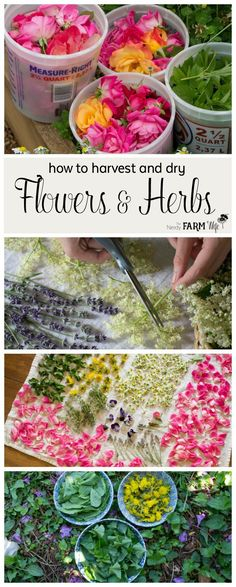 Learn how to easily harvest and dry flowers and herbs from your garden. (No fancy equipment needed!) Also included is a list of my favorite common flowers and herbs along with ideas for using them!