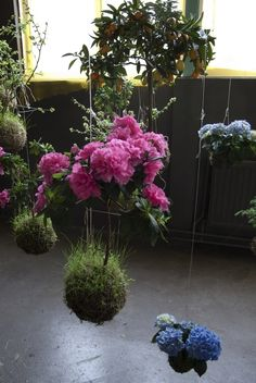 String gardens are a botanical technique meant to raise plants to eye level. Small moss balls called kokedama house the root system which is wrapped and then suspended by total awesomeness