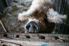 Dívány - Alapkonyha - Multitól a mangalicákig: Fekete Zsóka farmján jártunk