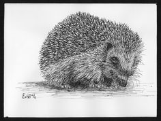 hedgehog in ink