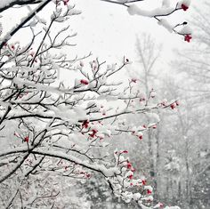 Red in snow