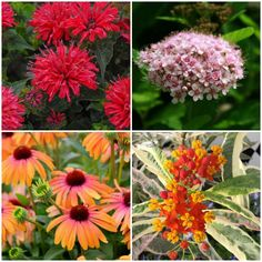 There are new varieties of plants coming out every year that will appeal to bees. Here are 12 of the newest.