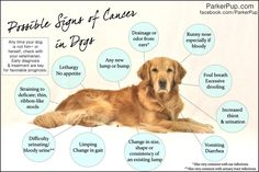 11 possible signs of cancer in dogs.