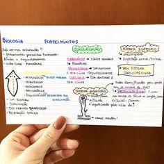 BIOLOGIA - PLATELMINTOS + DOENÇAS. #resumosonhodamedicina #medicina #resumos #biologia
