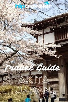 HipTraveler Guide to SPRINGTIME IN AKITA, JAPAN - A day in Akita City could never be boring, there's always something to do in Akita.