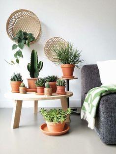 slaapkamer planten cactussen vetplanten vetplanten ophangen kamerplanten interieurontwerp terracotta potten muur mand