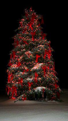 Macy's Holiday Tree Lighting, Friday, November 23, 5pm #perfectbostonholiday