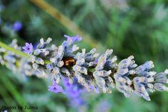 **Photos by Zulma** photo taken in Aviano, Italy
