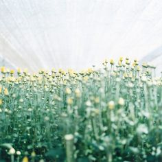 Rinko Kawauchi – 川内倫子 | 種を蒔く/Semear Rinko Kawauchi, Types Of Cameras, Japan Art, Botany, Serenity, Scene, In This Moment, Portrait, Flowers