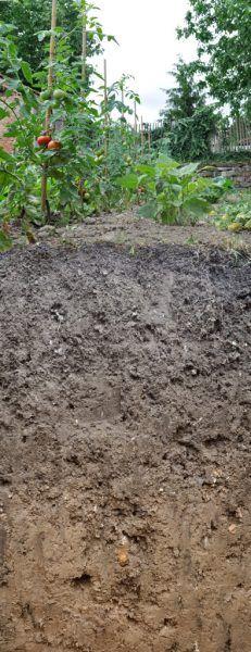 Der Gartenboden (Hortisol) ist Boden des Jahres 2017!