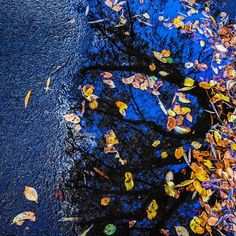 Autumn reflections of where the leaves once had been  by greens_pics