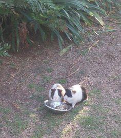Oreo & Panda