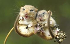 These little mice are so adorable ツ ♥