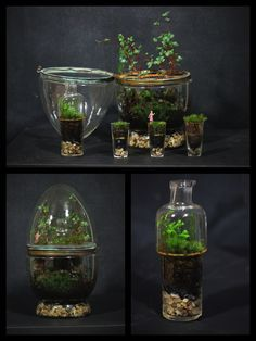 This terrarium is probably the most unique one I will ever make. I planted it back in March and have been letting it mature for 8 months! It...
