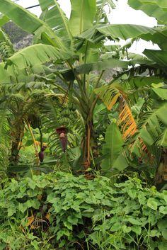 #cuba #vinales #mogote Tropical Gardens, Tropical Landscaping, Cuba Vinales, Gods Creation, Agriculture, Roman, Places To Go, Plant Leaves, Beautiful Pictures