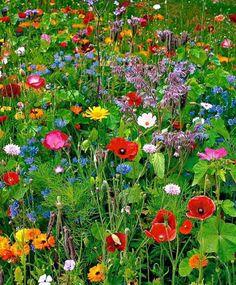Veld vol bloemen.