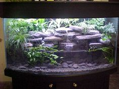 I've always wanted a set-up like this for my Axolotl's 55 gallon