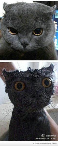 Look What That Damn Water Did To You - made me laugh more than it probably should ... :D